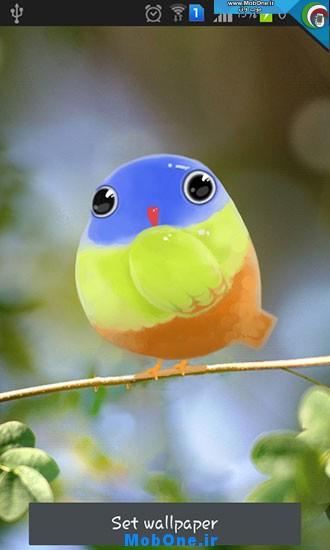 1_cute_bird.jpg